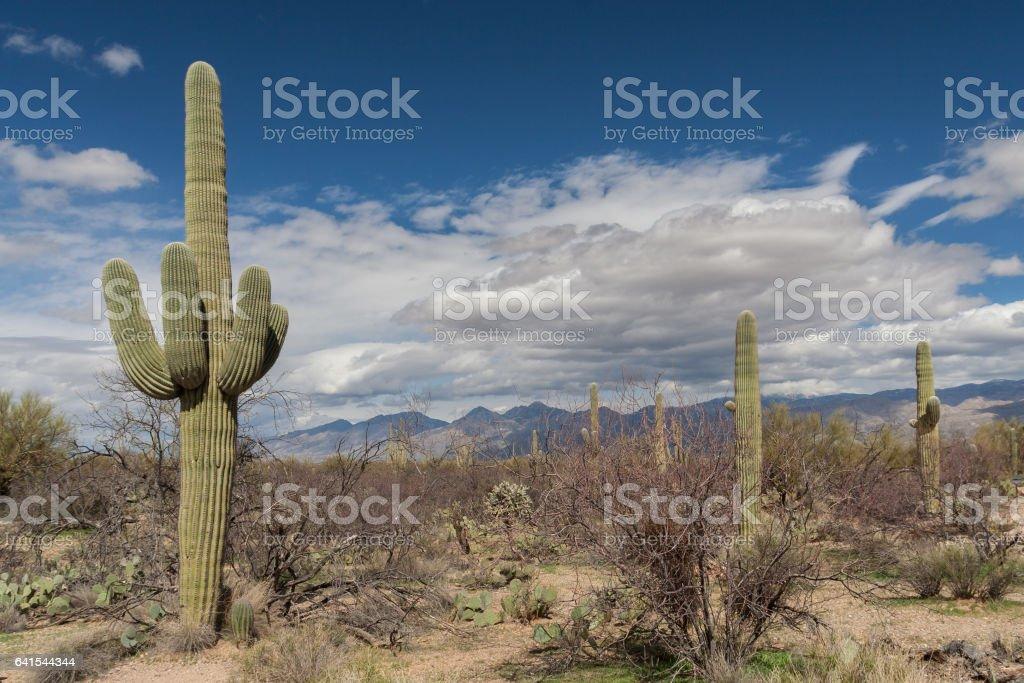 Saguaro National Park foto