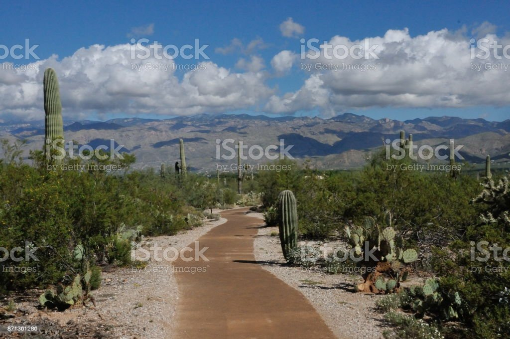 Saguaro National Park Trail and Mountains stock photo