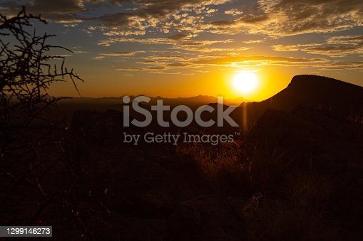 Sun shining through arm of saguaro cactus during sunset in the McDowell sonoran conservancy