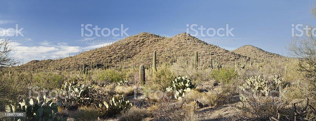Saguaro National Park West royalty-free stock photo