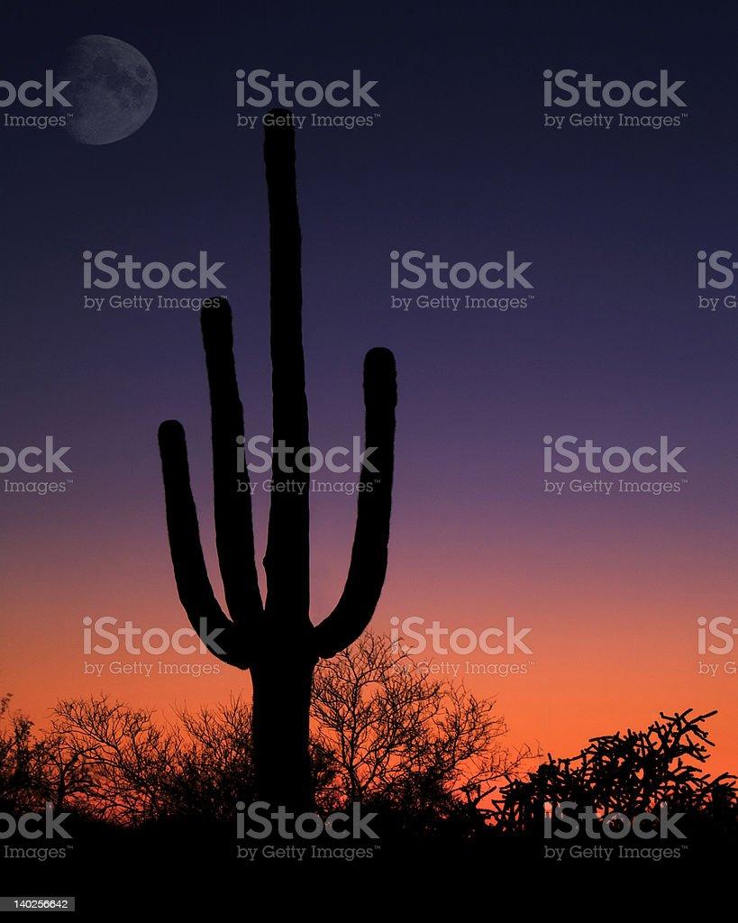 Saguaro Night royalty-free stock photo