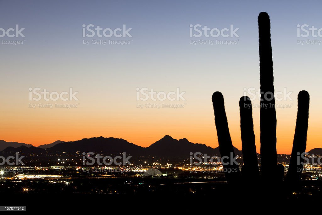 Saguaro Silhouette Over Desert City Lights royalty-free stock photo