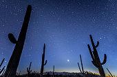 Saguaro cactus under a star lit night. Sonoran Desert near Tucson, Arizona. American Southwest.