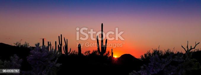 Saguaro Sunset Panorama in the Sonoran Desert