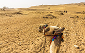 Sahara as seen by a camel rider - Egypt