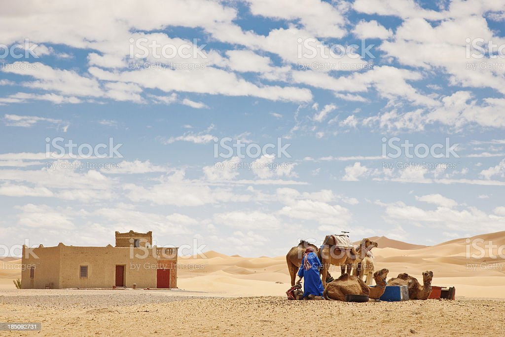 Sahara Berber with Camels Erg Chebbi Morocco stock photo