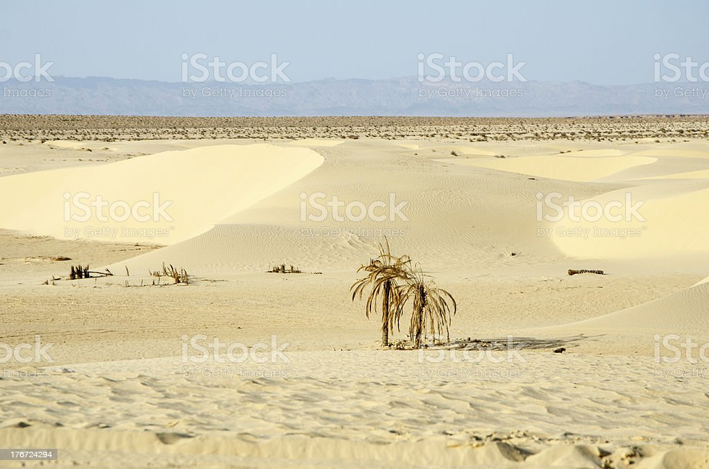 Sahara dessert royalty-free stock photo