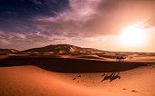 Sahara essence