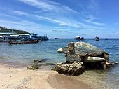 Koh Tao/Thailand; 09/02/17. Turtle statue of the beach in Koh Tao island. Diving destination.