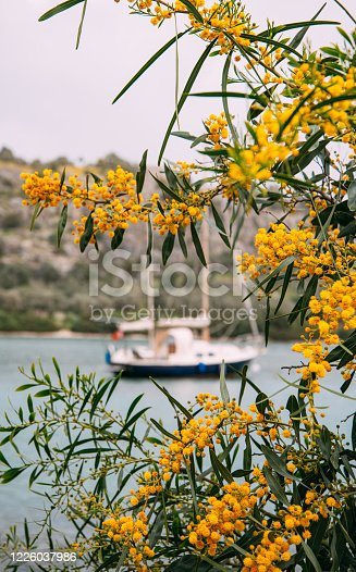 Sailboat Behind the Flowers