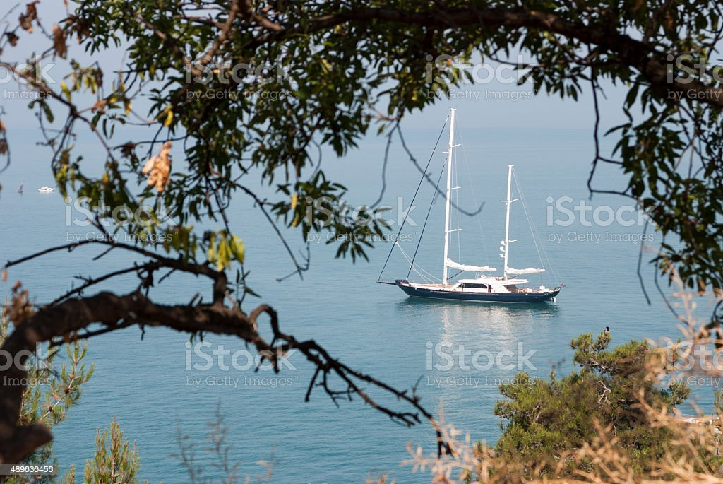 Sailboat Behind Tree stock photo