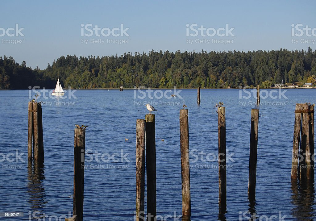 Sailboat in Budd Bay royalty-free stock photo