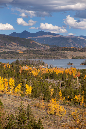 With yellow aspen and pine trees covering the hillsides, a sailboat cruises the waters of Lake Dillon or Dillon Reservoir in Summit County. The 14,000+ foot mountains of Grays (on the right) and Torreys Peaks (on left) rise into a blue autumn sky.