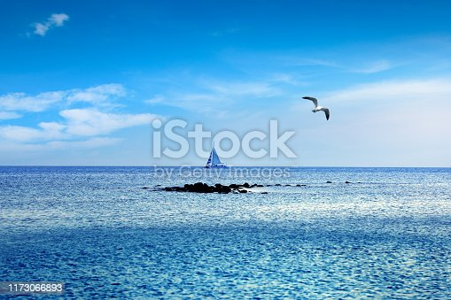 beautiful sailboat sailing on sea over sunny blue sky with flying seagull in Florida, USA