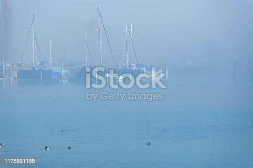 Sailboats in a foggy harbor