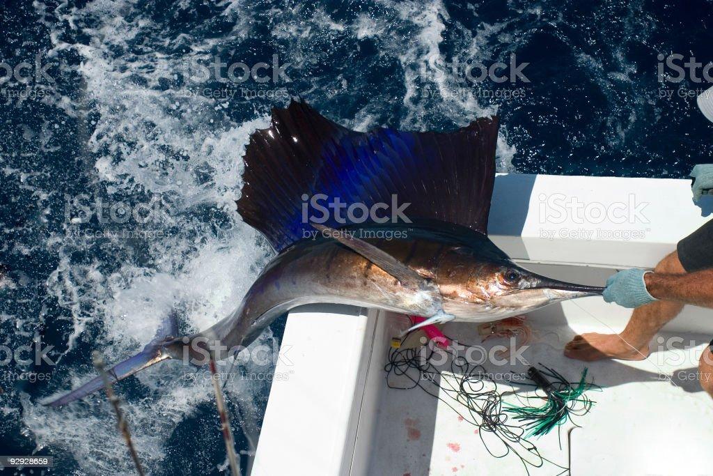 Sea of Cortez deep sea fishing,