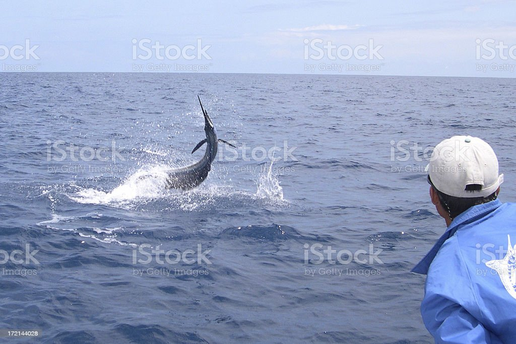 Sailfish On royalty-free stock photo
