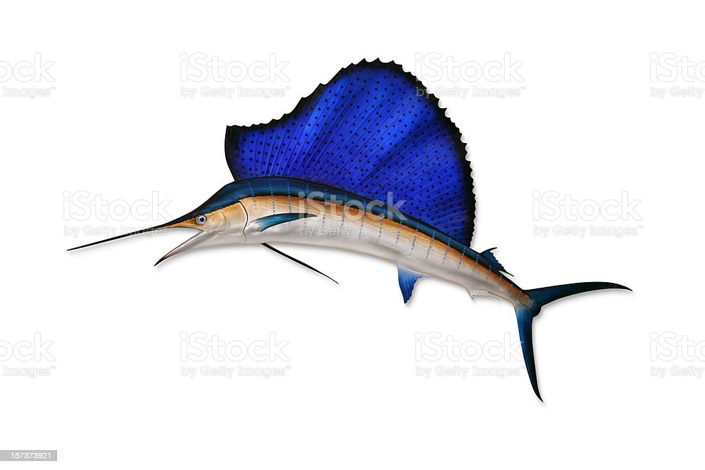 Sailfish with Clipping Path stock photo