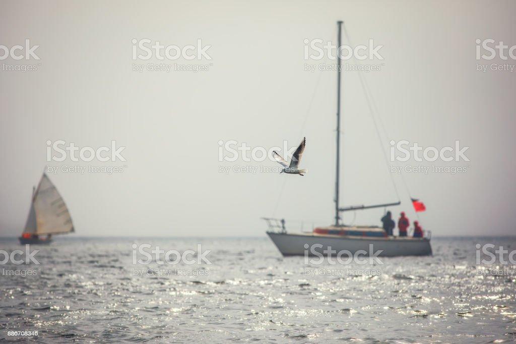 Sailing boats regatta with white sails stock photo