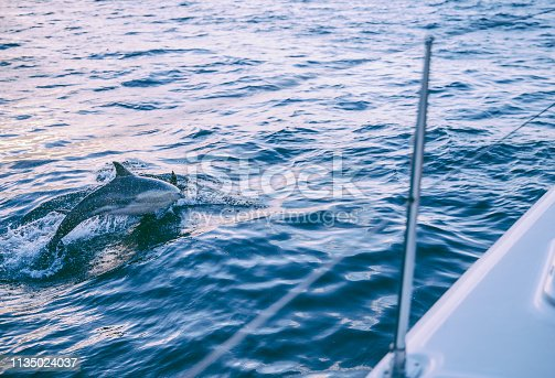istock Sailing in Cape Town 1135024037