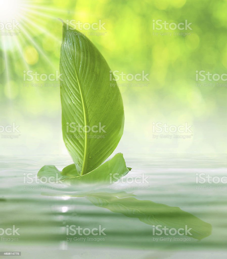 sailing leaf stock photo