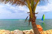 Sailing on Idyllic Beach with tropical palm tree - Montego Bay - Jamaica, Caribbean sea