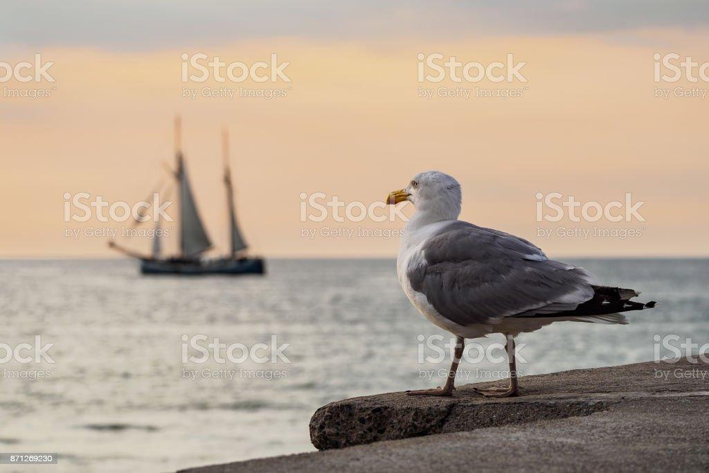 Segelschiff und Möwe an der Ostsee in Rostock – Foto