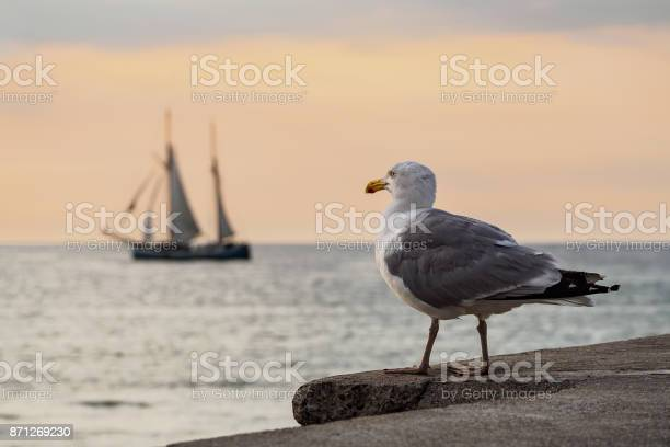 Photo of Sailing ship and seagull on the Baltic Sea in Rostock