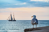 Sailing ship and seagull on the Baltic Sea in Warnemuende, Germany.
