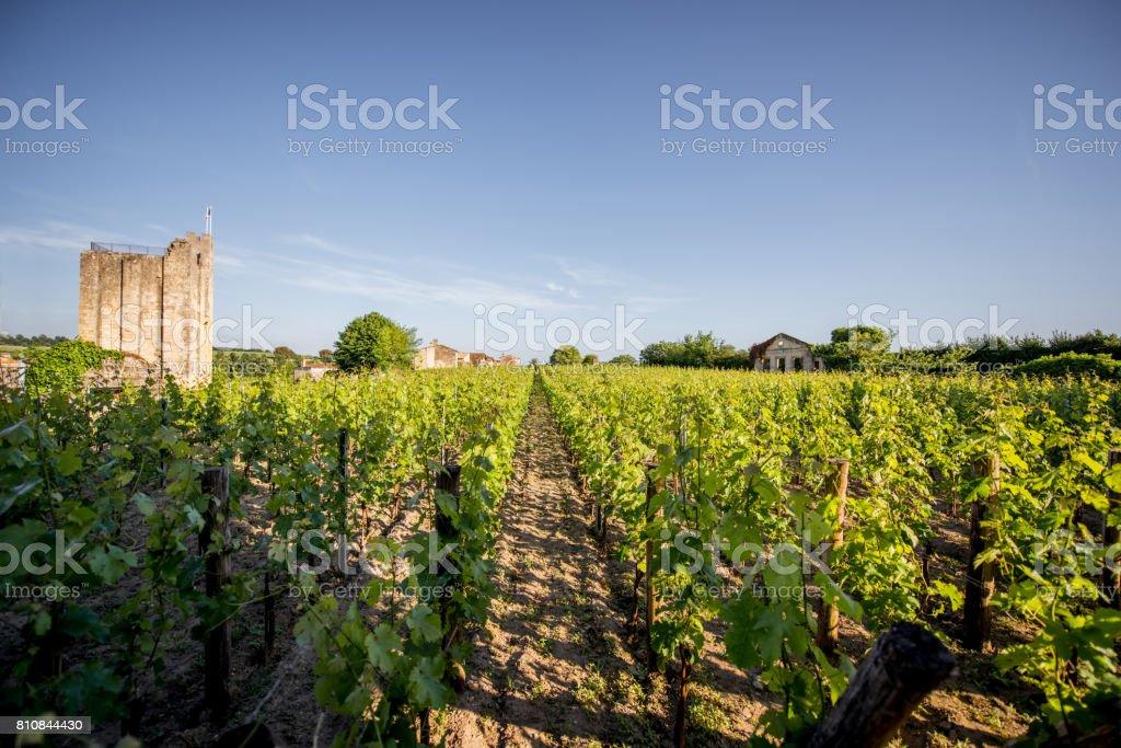 Saint Emilion vineyards in France stock photo