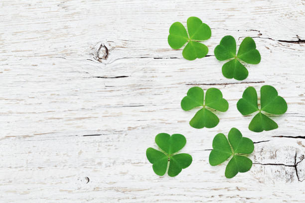 saint patricks day background with green shamrock. flat lay. - st patricks day stock photos and pictures