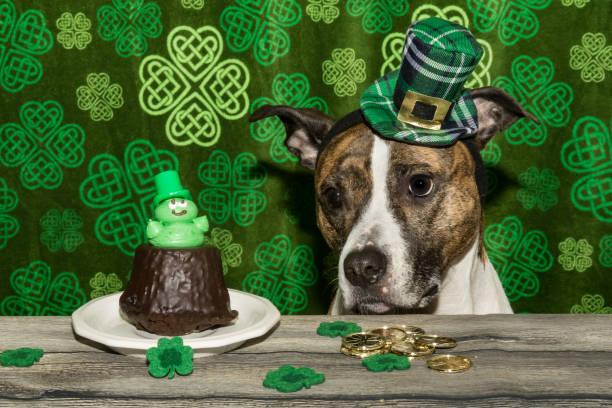 saint patrick's day dog - sugar cane foto e immagini stock