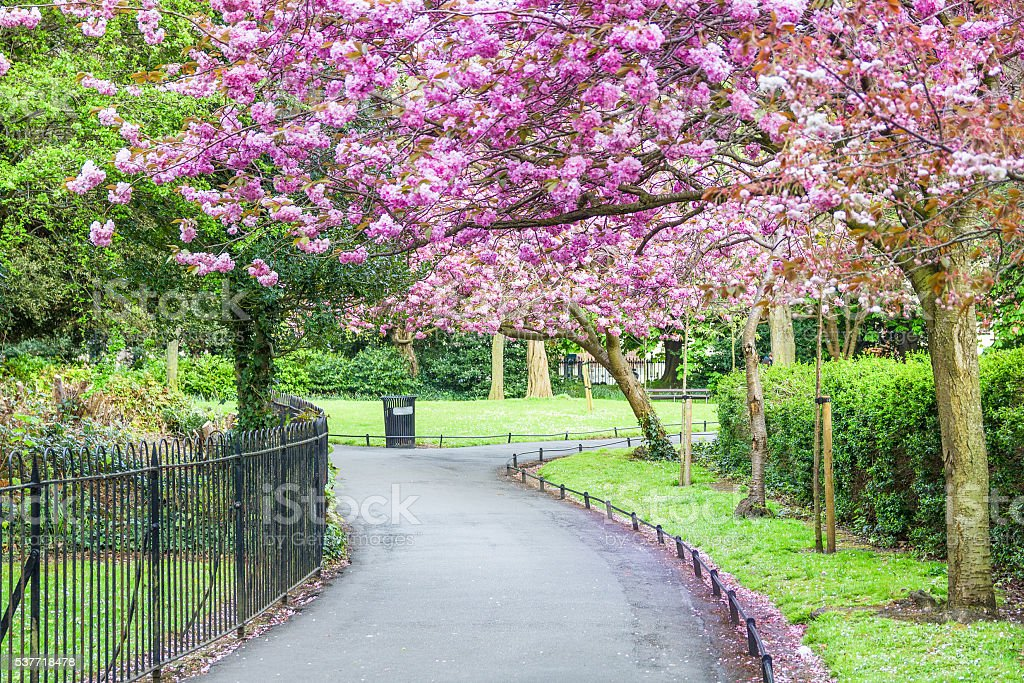 Saint Stephen's Green park, Dublin – Foto