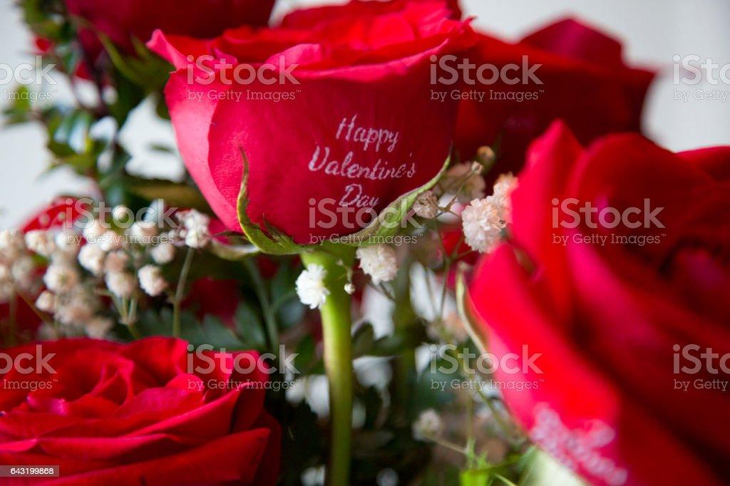 Saint Valentine's Day Rose. stock photo