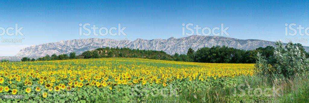 Sainte Victoire and Flowers stock photo