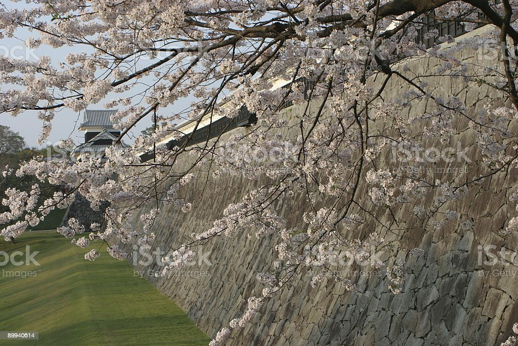 Sakura and castle wall stock photo