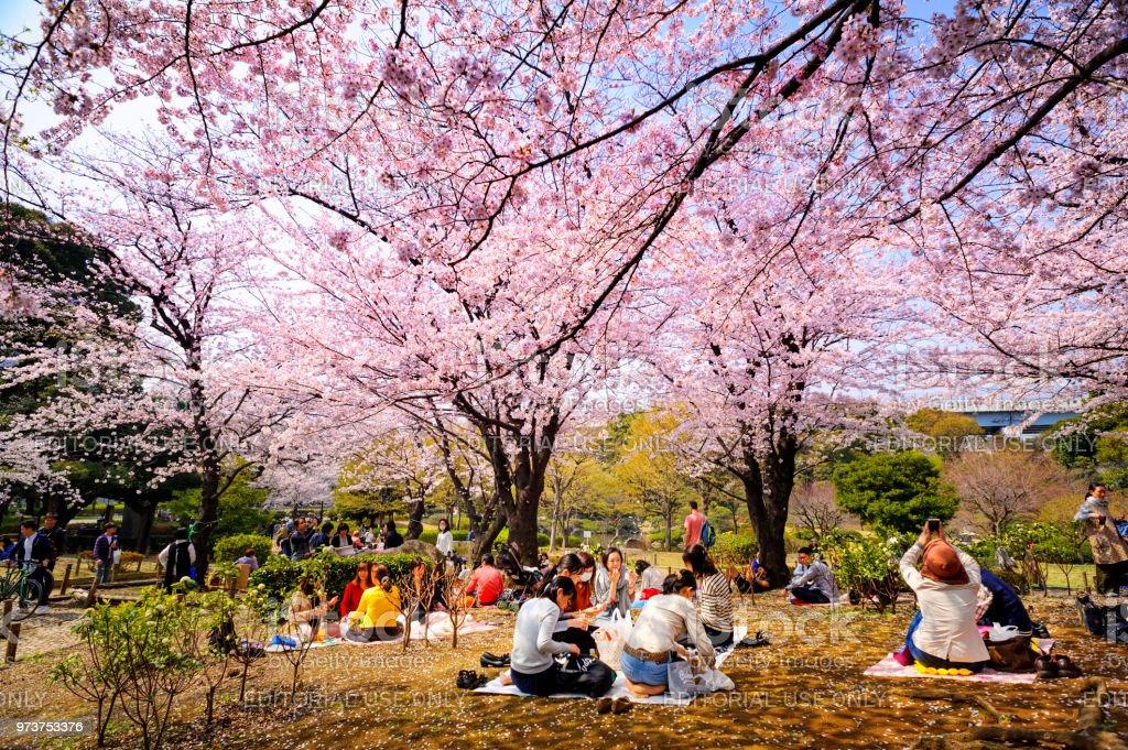 Sakura Fleur Au Parc Sumida Tokyo Au Japon Photos Et Plus D Images