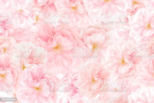 Sakura blossoms background picture id803600064?b=1&k=6&m=803600064&s=612x612&h=otqrhqfsctamv tzd2kkdcfvqvbia1ymd5wkbigy0ze=