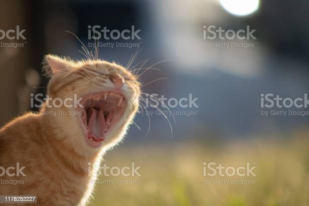 Sakura cat saved by animal protection activities picture id1178252227?b=1&k=6&m=1178252227&s=612x612&h=ppmlchatx3wf0pm2wdfzeskrvr4q2u kwhnqei7inzc=