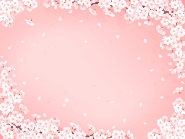 sakura, cherry blossom frame - schöne bilderrahmen stock-fotos und bilder