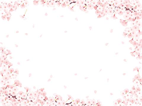 sakura, cherry blossom frame