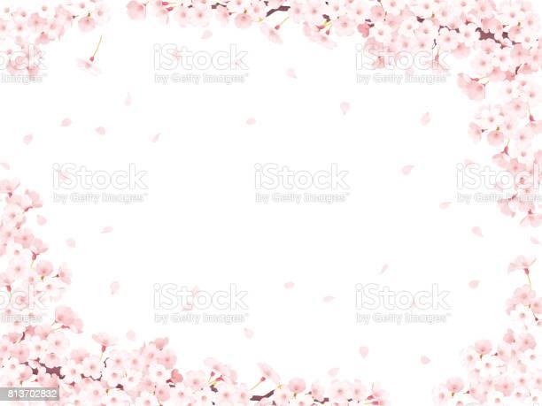 Sakura cherry blossom frame picture id813702832?b=1&k=6&m=813702832&s=612x612&h=8ccp012g2nzbo wgkp rd8imxec3 loldgc5eqz5jse=