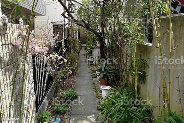 Sakura cherry blossom picture id524025648?b=1&k=6&m=524025648&s=612x612&h=2fnilf hc42ilqwfsvyxgtyuzdxbgo xory4ni  b3o=