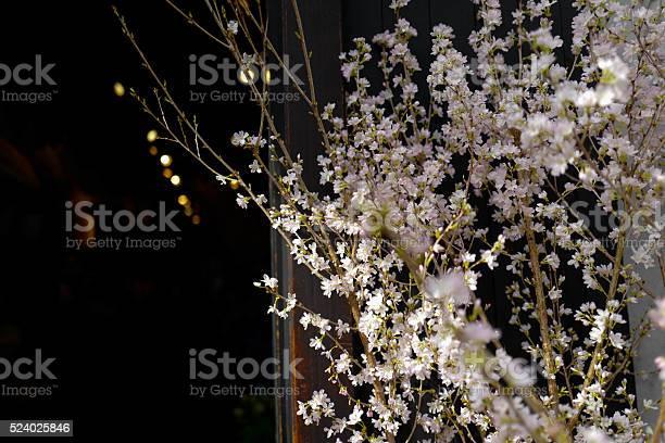 Sakura cherry blossom picture id524025846?b=1&k=6&m=524025846&s=612x612&h=q37vo88ioyqtrcvd4upczigyznjhlpm6yj9f06l0v94=