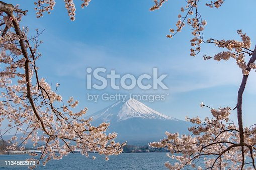 Sakura cherry blossom with Mt. Fuji at kawaguchiko lake in Japan.