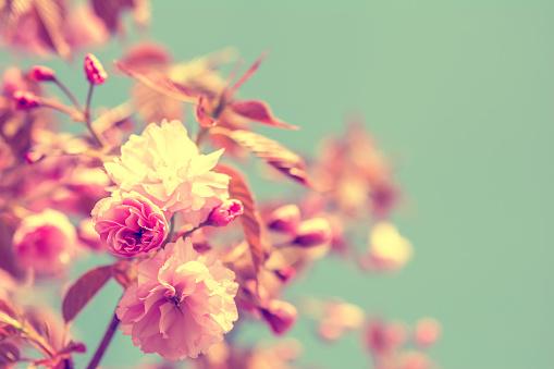 Vintage flower stock photos