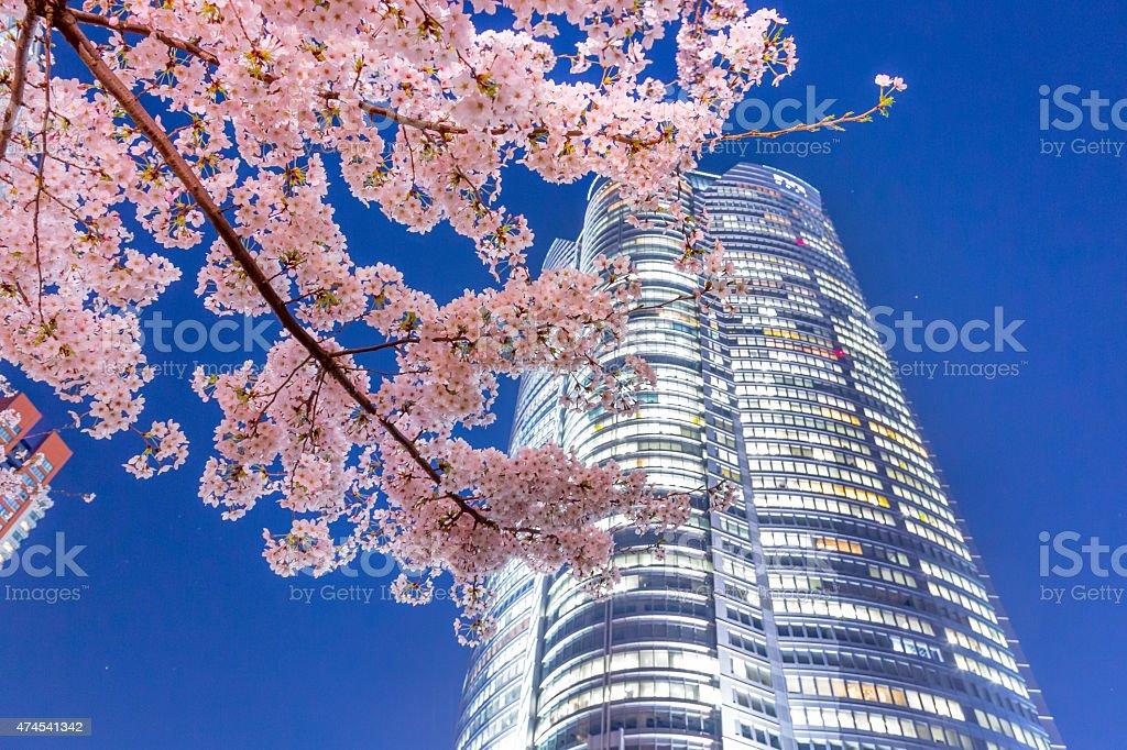 Sakura with Roppongi-Hills stock photo