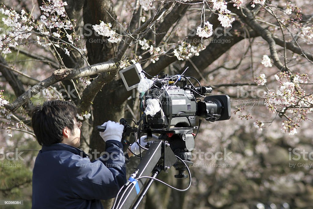 Sakura--Big News in Japan royalty-free stock photo
