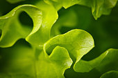 Salad background. Macro shot
