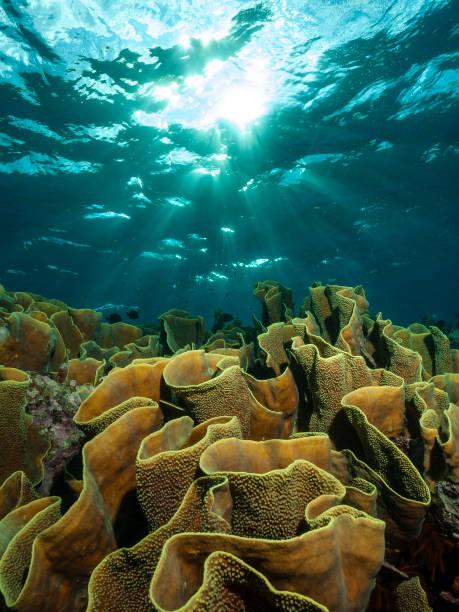 Salat-Coral – Foto